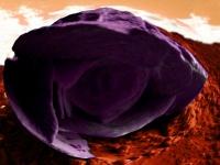 Serie_Rosa. Stampa diretta su plexiglas: 45x55 cm